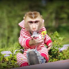 Monkey Baby Nui