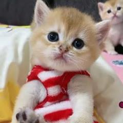 Cute Cats Zone