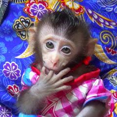 Monkey Baby Nita Cooking
