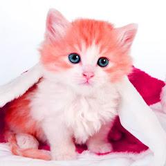 Lovely Pets World