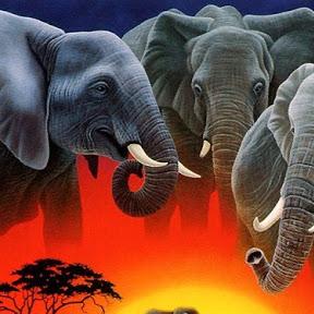 cote d'ivoire Decouverte