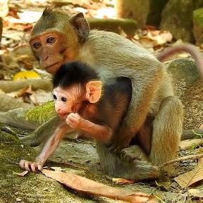 Both Baby Monkey
