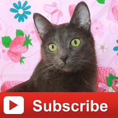 Animal Cat Video
