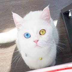 Lwoavie Cat孤泣&孤貓