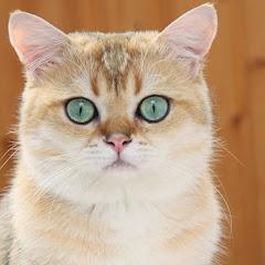Engraçado gato