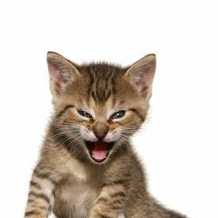 Roaring Kitty