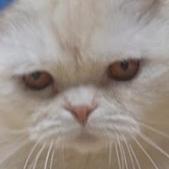 냥의 삶 Cats' life