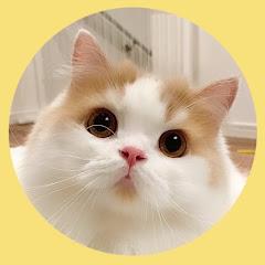 猫のレモンちゃんねる