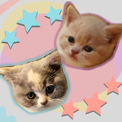 Rolypoly Cats