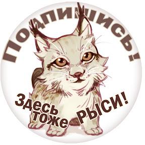 BobCat Lynx Live