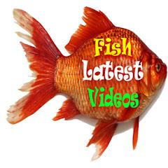 fish latest videos