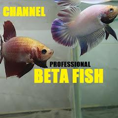 Beta Fish 2016