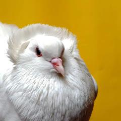 Sweet Birds Life