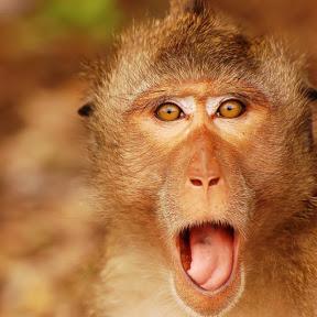 Monkey's Natural Life