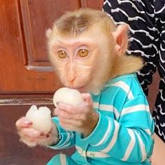 Monkey Zono
