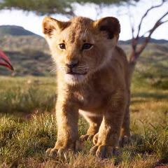 AT Wild Animals