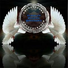 Tumbler pigeon breeders club