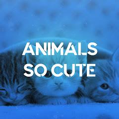 Animals So Cute