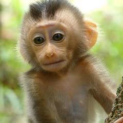 BTS life Monkey
