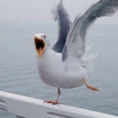 케이팝 철새