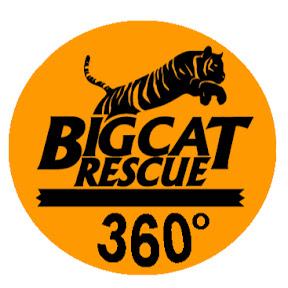 360 Big Cats